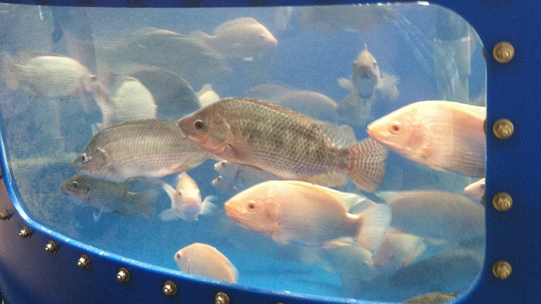 GSA - Fish Farm